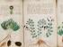 809px-Voynich_Manuscript_170