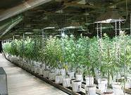 Idea № 627. Growing Underground: la granja orgánica vertical establecida en un refugio antiaéreo