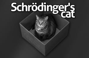 gatoschrodinger